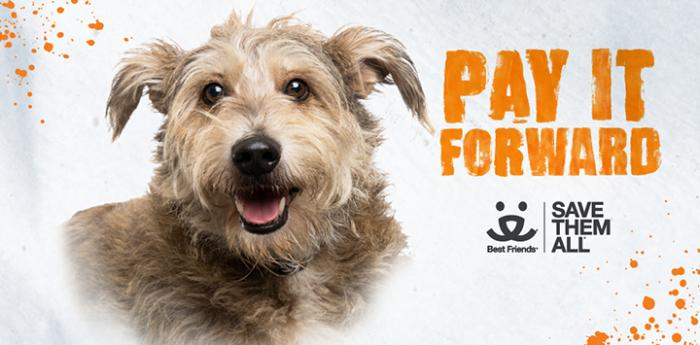 Tan terrier dog with Pay It Forward text and Best Friends logo