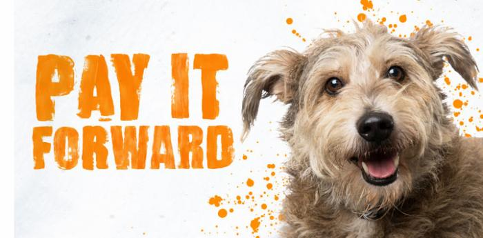 Scruffy terrier dog with the words Pay It Forward and some paint splats