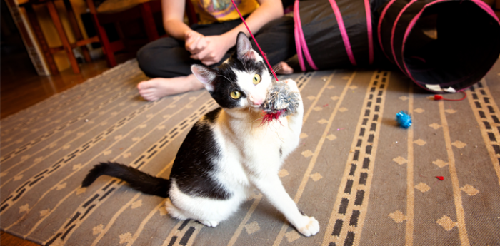 Kitten plays with string on rug in a home setting with person