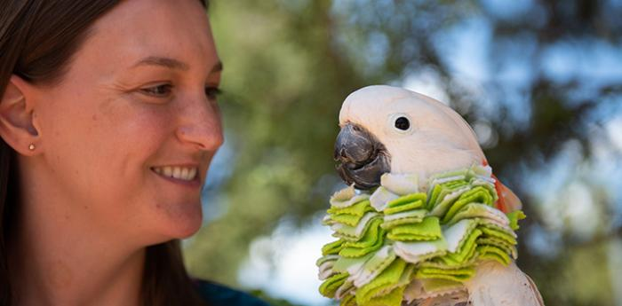 "Smiling woman next to a cockatoo wearing a protective fabric ""cone"" around his neck"