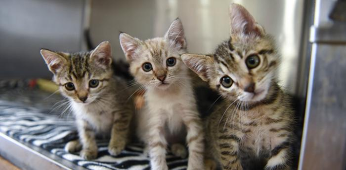 Three kittens looking at the camera