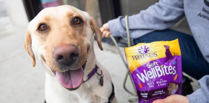 Yellow Labrador dog next to a person holding a bag of Wellness WellBites dog treats