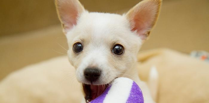 Labrinth the cute puppy