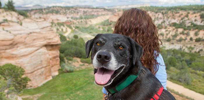 Dog and woman looking out over Angel Canyon