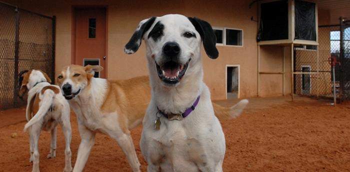 Dogs at Dogtown. The 'DogTown' TV show is now re-airing on the CW Network.