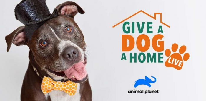 """Give a Dog a Home: Live!"" on Animal Planet with a gray and white dog wearing a top hat and bow tie"