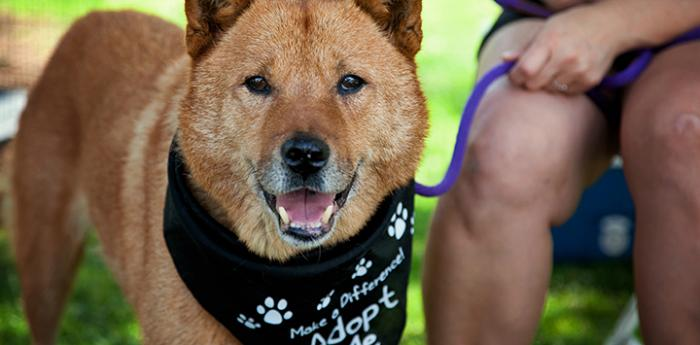Dogs like this rescued Chow mix at a Best Friends adoption event are just one of many reasons to rescue a pet.