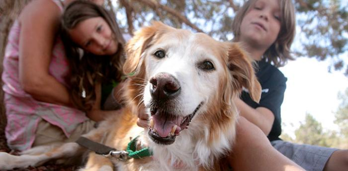 These kids are making a difference for homeless pets like this Golden Retriever mix by volunteering with animals.