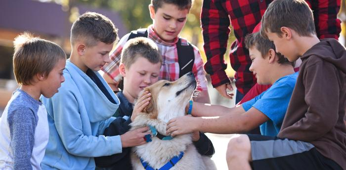 Multiple young boys petting a dog