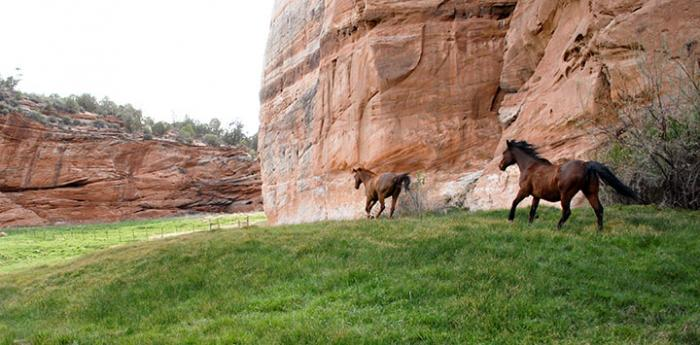 Explore Best Friends Sanctuary in Kanab, an animal refuge for homeless pets like these horses.