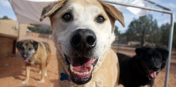 Adoptable shelter dogs at Dogtown Utah at Best Friends Animal Sanctuary