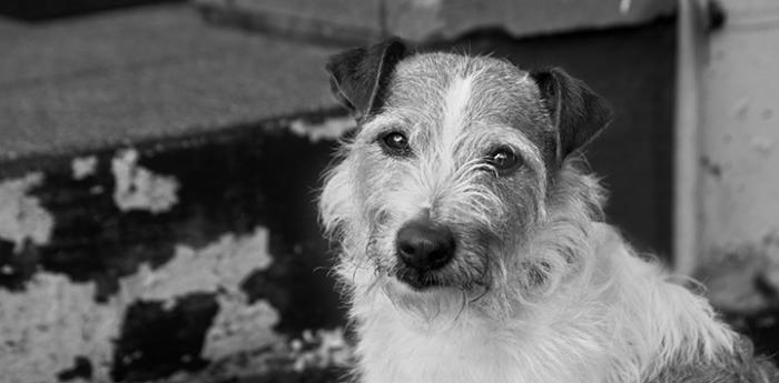 Terrier dog who supports the NKUT initiative