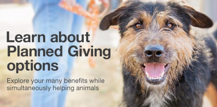 Learn about planned giving (legacy planning) options to help dogs in need like this cute, scruffy pooch.