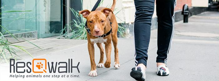 Download the ResQwalk App and walk for homeless pets.