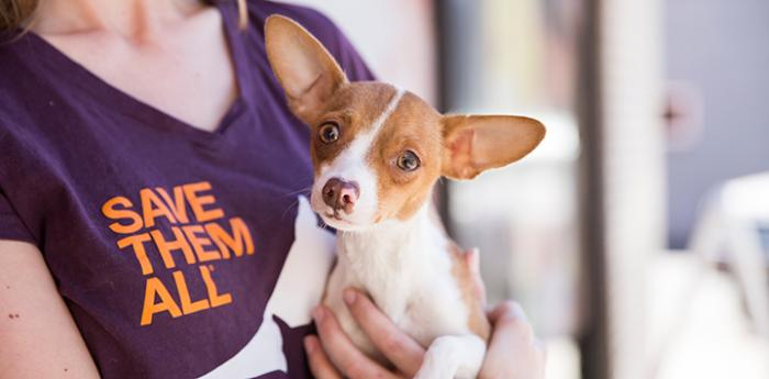 Woman wearing Save Them All t-shirt and holding a Chihuahua mix dog