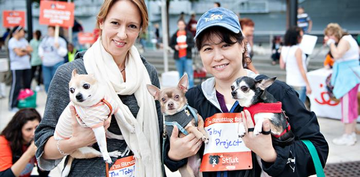 Three Chihuahuas at Strut Your Mutt in New York City