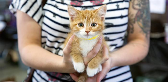 Orange tabby baby kitten. Adopt a pet like this sweet kitten from a shelter near you.