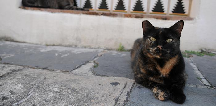 Stray calico cat outside a building