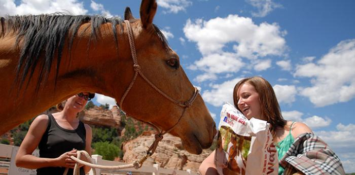 Volunteer works with horse at Horse Haven at Best Friends Animal Sanctuary