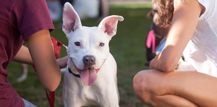 Pitbull enjoys love and attention. Kindness to animals is Best Friends' value.