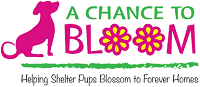 """A Chance to Bloom logo with dog and tagline """"Helping Shelter Pups Blossom to Forever Homes"""""""