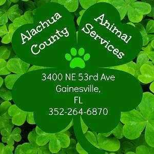 Alachua County Animal Services with shamrocks and paw print