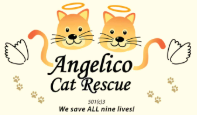Angelico Cat Rescue (Lauderhill, Florida) logo on light yellow background with two cat faces with halos above org name in black