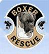 Boxer Rescue Los Angeles (Encino, California) logo with a boxer dog