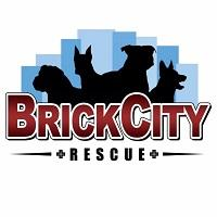 Brick City Rescue NJ (Lincoln Park, New Jersey) logo with four dogs in shadow on a blue background