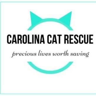 Carolina Cat Rescue (Raleigh, North Carolina) logo is teal circle with cat ears at the top around organization name