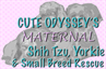 Cute Odyssey Inc (San Diego, California) logo of two Shih Tzu and a Yorkie with text 'Cute Odyssey Maternal'