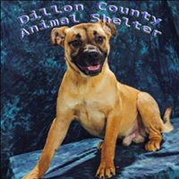 Dillon County Animal Shelter (Dillon, South Carolina) logo with image of dog on blue background