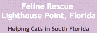 Feline Rescue (Lighthouse Point, Florida) logo of name, tagline Helping Cats in South Florida on purple background