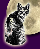 Feral Cat Coalition (San Diego, California) logo of cat with moon background