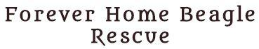 Forever Home Beagle Rescue (Pittsburgh, Pennsylvania) logo