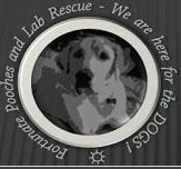 Fortunate Pooches and Lab Rescue (Fox Lake, Illinois) with logo of Lab in circle & tagline We are here for the Dogs