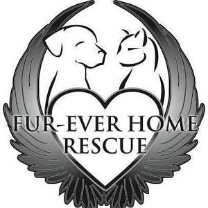 Fur-Ever Home Rescue (Blaine, Minnesota) logo has wings around a heart and a dog and a cat