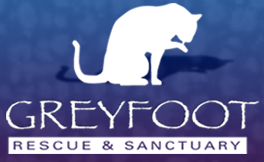 Greyfoot Cat Rescue & Sanctuary (Oak View, California) logo has a white cat licking its paw with the organization name under it