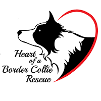 Heart of a Border Collie Rescue (Mound, Minnesota) logo has a border collie in profile looking out from a heart
