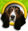 Helping Hands Basset Rescue (Round Rock, Texas) logo has the head of a tri-color Basset Hound in a gold circle