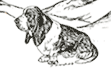 High Country Basset Hound Rescue (Lakewood, Colorado) logo of sketch of basset hound