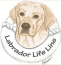 Labrador Life Line (Cos Cob, Connecticut) logo of yellow Labrador dog with white and red life raft and Labrador Lift Line text