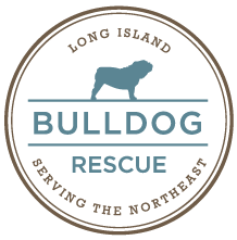 "Long Island Bulldog Rescue (Stony Brook, New York) logo is the org name in a circle with a bulldog standing over ""Bulldog"""