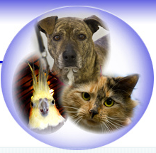 Middletown Humane Society (Middletown, New York) logo with photo of group of various cats and dogs, Middletown Humane Society