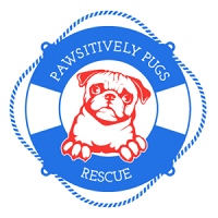 Pawsitively Pugs Rescue (Franklinton, North Carolina) logo is a pug in the middle of a life preserver with the org name on it