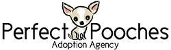 Perfect Pooches Adoption Agency (Romeoville, Illinois) logo of fawn and white chihuahua dog, Chicago area dog rescue
