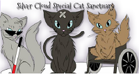 Silver Cloud Special Cat Services