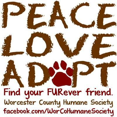 Worcester County Humane Society (Berlin, Maryland) logo peave love adopt