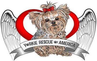 Yorkie Rescue of America logo
