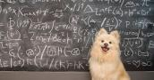 Small blond dog sitting in front of chalkboard with mathematical calculations